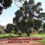 Foto de Kasubi Tombs