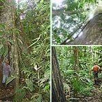 Turismo local, visita al Bosque Protector.