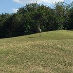 Unusual birds to greet us