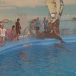 Dolphins Bay Phuket Photo