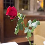 Rose on Table