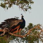 Photo of Bundala National Park