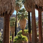 Fortynine Palms Oasis Trail Photo