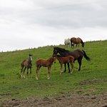 Beautiful Horses in Ireland