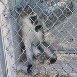 Octagon Wildlife Sanctuary And Rehabilitation Center Photo