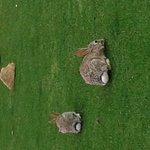 Photo de Estrella Mountain Ranch Golf Club