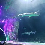 Photo of Kelly Tarlton's Sea Life Aquarium