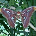 Un beau papillon et  tant d'autres