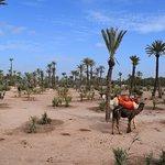 Camel ride...