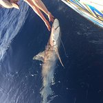 Meleca's Shark!