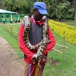 Resident python