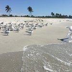 Foto de South Seas Island Resort