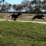 Dogs in Mutt Race