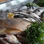Fresh fish daily. !