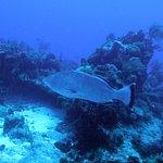 Foto de Pro Dive Mexico