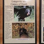 some displays are interactive, and some are posted information and facts