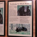 WE are the biggest problem for bears