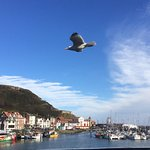"Watch out for those pesky seagulls! They obviously enjoy ""Harbour view cafe"" too!"