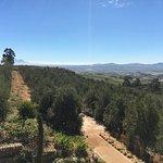 Views of their vineyard (Hidden Valley)