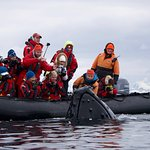 Whales visited us up close on a magical zodiac expedition
