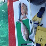 The catch: Mackerel, Hogfish and Snapper.