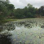 Foto de Austin Nature & Science Center