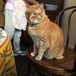 Pip the cat! He had breakfast with us.