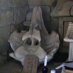 鵜原理想郷:大杉神社の鯨骨