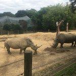 Rhinos!!!