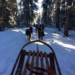 Dog sledding in the Swedish woods