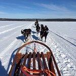 Dog Sledding across the frozen lake
