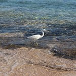 Photo de Coral Sea Sensatori - Sharm El Sheikh