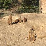 Photo of Ljubljana Zoo