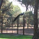Parque con Pavos reales