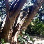 Photo of La Concepcion Jardin Botanico Historico de Malaga