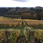 View of vines during Fall at Archery Summit