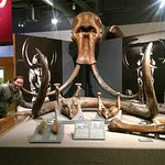 University of Alaska Museum of the North Foto