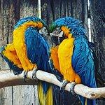 Photo of World of Birds