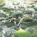 Taille d'arbre en Bonzaï