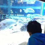 Photo de Aquarium Sea Life Paris Val D'Europe