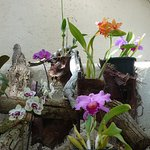 Wide range of orchids