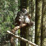 Ellie Schiller Homosassa Springs Wildlife State Park Foto
