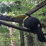 Photo of Macaw Mountain Bird Park & Nature Reserve