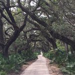 Main road and Live Oak canopy