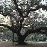 Gorgeous Oak trees