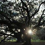 Sunset among the great big oaks.