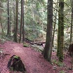 Very beautiful trail. Lots of old growth trees.