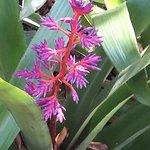 Photo of Fairchild Tropical Botanic Garden