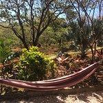 Foto de Los Nancites Cabinas / Villas