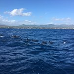 Kauai Sea Rider Snorkel & Whale Watching Tours